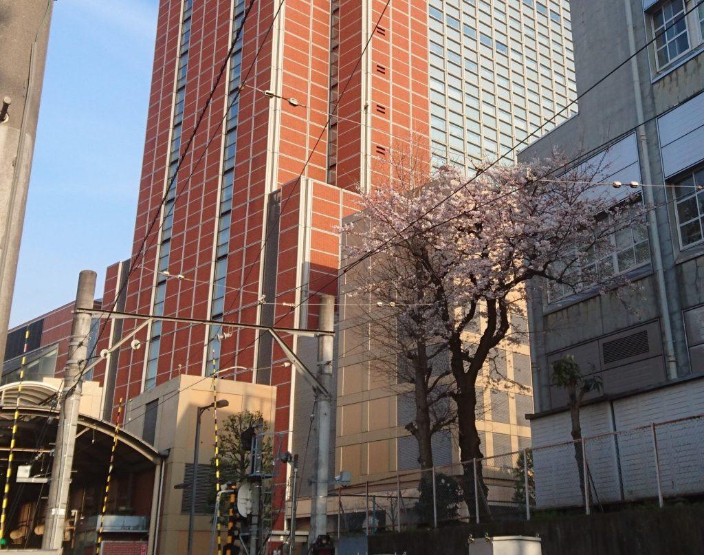 キャロットタワーと桜